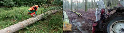 Die Arbeit im Wald